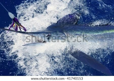 Beautiful white marlin real bill fish on atlantic water sport fishing - stock photo