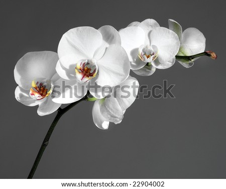 Beautiful white orchid - stock photo