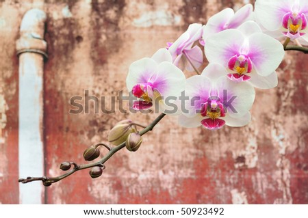 Beautiful white orchid against an old wall - stock photo