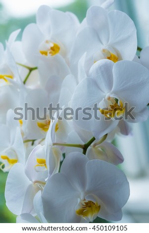beautiful white  orchid flower bouquet sun shines brightly - stock photo