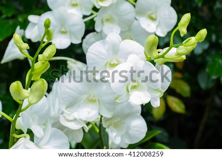 Beautiful white Orchid Flowers in the garden