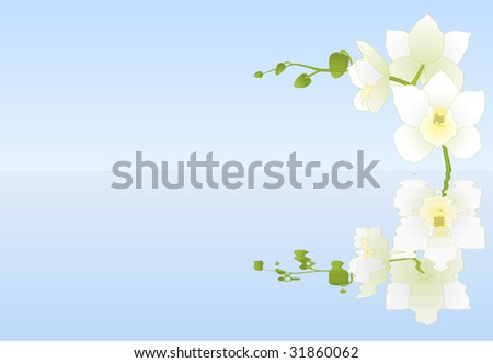 Beautiful white orchid with reflection in water - stock photo