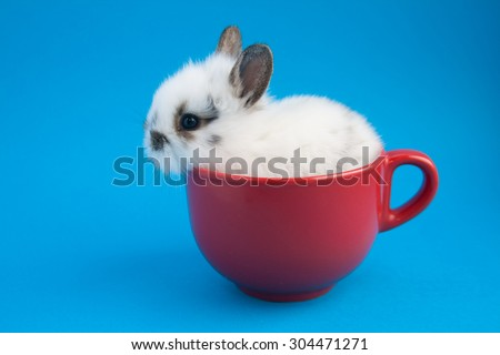 Beautiful white rabbit with blue eyes sitting in red cup on blue background