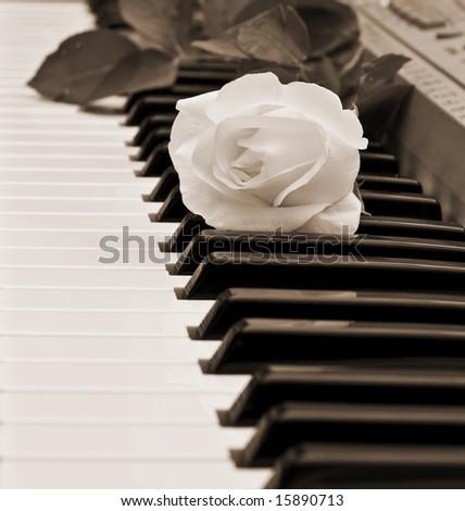 beautiful white rose on piano keyboard - stock photo