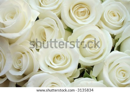 Beautiful white roses for wedding - texture - stock photo