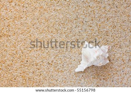 Beautiful white sea shell on sand background - stock photo