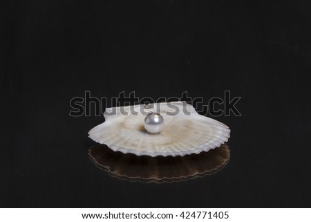 Beautiful white sea shell with a pearl on the mirror wooden table - stock photo