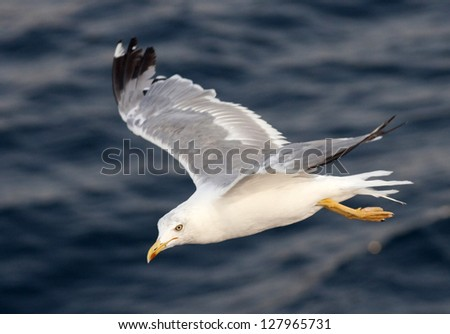 Beautiful white seagull flying over deep blue waves - stock photo