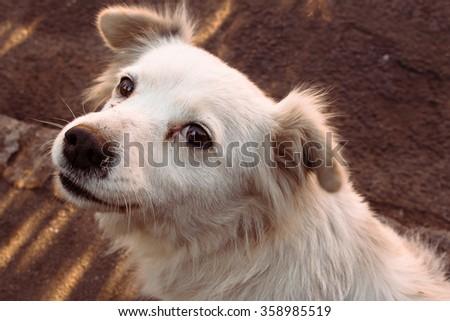 Beautiful white stray dog with cute eyes - stock photo