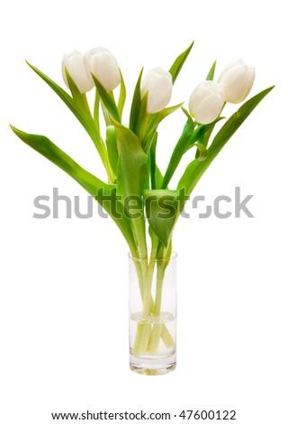 beautiful white tulips in vase - stock photo