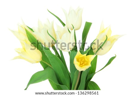 Beautiful white tulips isolated on white - stock photo