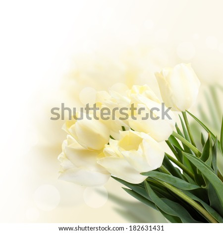 Beautiful white tulips on bright background