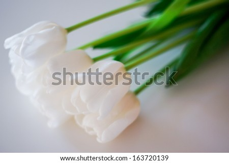 Beautiful white tulips on white