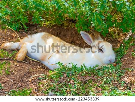beautiful white - yellow rabbit sitting alone under the shade - stock photo
