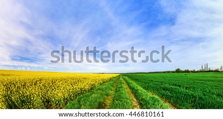 Beautiful wide panoramic view of colza field, tricolor, yellow, green, blue