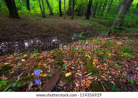 Beautiful wild crocus, Colchicum autumnale, flowers in the fall in a mountain forest