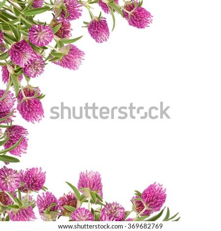 Beautiful Wild Flowers Bouquet. Wildflowers background. Clover - stock photo