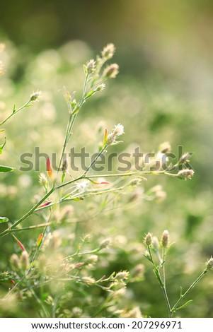 Beautiful wild flowers in field - stock photo