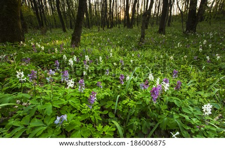 Beautiful wild flowers in the forest, under warm evening light