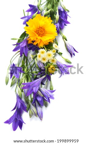 Beautiful wild flowers isolated on white - stock photo