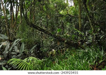 Beautiful wild jungle - stock photo