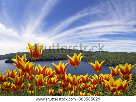 Beautiful wild lake with colorful flowers on front - stock photo