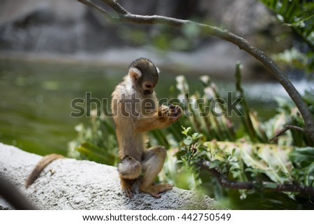 Beautiful wild monkey sitting near the water