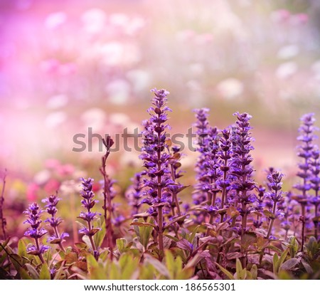 Beautiful wild purple flower in meadow