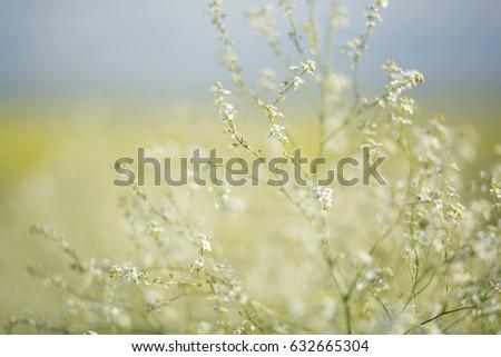 Beautiful wild white flowers on field stock photo edit now beautiful wild white flowers on the field mightylinksfo