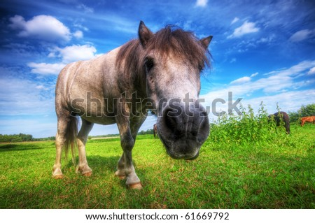 Beautiful wild young horse on the summer field. - stock photo
