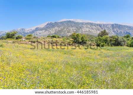 Beautiful wildflowers on the hillside in the foothills of the Ida mountains on Crete. The meadow, full of blooming flowers, is a habitat for all the insects, butterflies, bumblebees in the mountains - stock photo