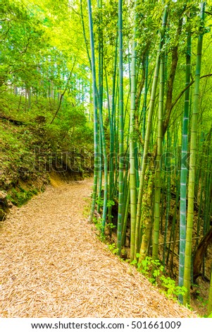 Beautiful winding leaf covered  trail lined by green bamboo forest leads to former grounds of Tsumago Castle along the Nakasendo route in Japan. Vertical