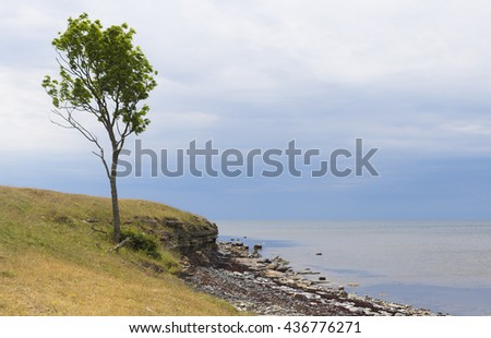 beautiful windy landscape with northern sea, rocky seaside and cliff, one single deciduous tree  - stock photo