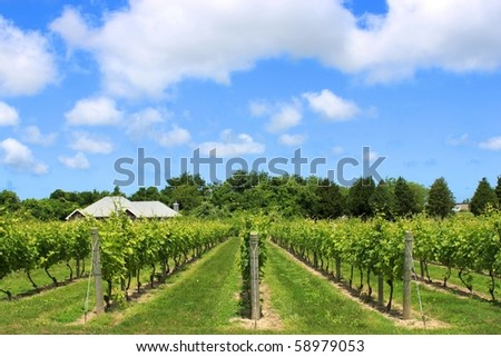 Beautiful Winery natural background in the Hampton - stock photo