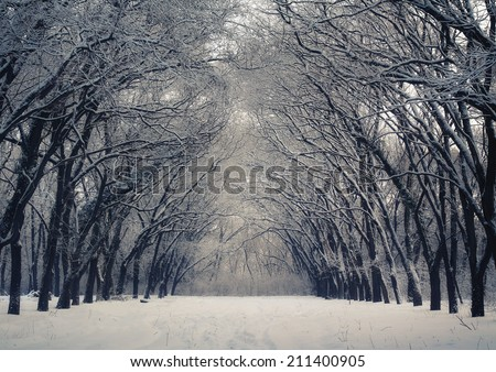 Beautiful winter alley - stock photo