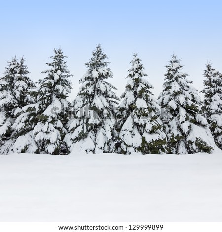 Beautiful winter day. Field and fir trees covered by snow. - stock photo