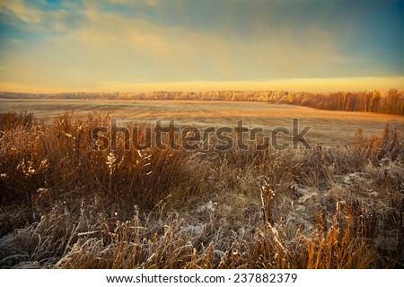 Beautiful winter landscape at sunset. Field, forest, dry grass in the frost in the foreground - stock photo