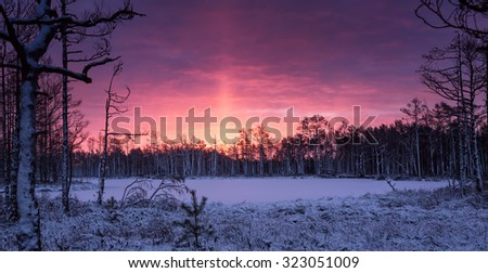 Beautiful winter landscape at swamp in Latvia with silhouettes of trees on horizon and stunning colorful sunrise - stock photo