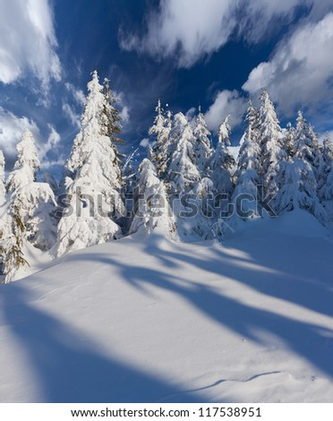 Beautiful winter landscape in the forest - stock photo