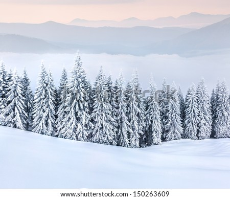 Beautiful winter landscape in the  mountains.  - stock photo