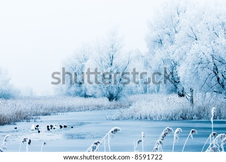 beautiful winter landscape scene with frozen trees and birds in the river - stock photo