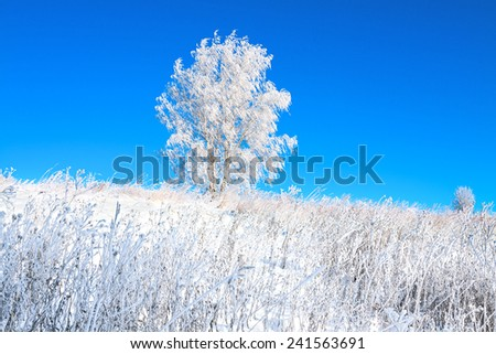 beautiful winter landscape with a lonely tree in a field and the blue sky - stock photo