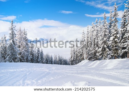 Beautiful winter landscape with fir trees - stock photo