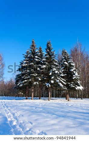 Beautiful winter landscape with snow and fir-trees. Outdoor in park