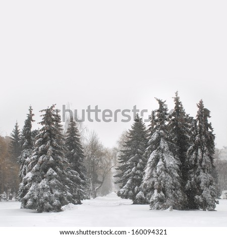 Beautiful winter landscape with snow covered Christmass trees