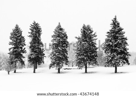 beautiful winter landscape with snow covered evergreen trees