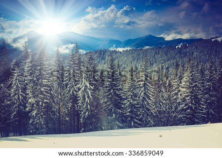 Beautiful winter landscape with snow covered trees in sunlight.  - stock photo