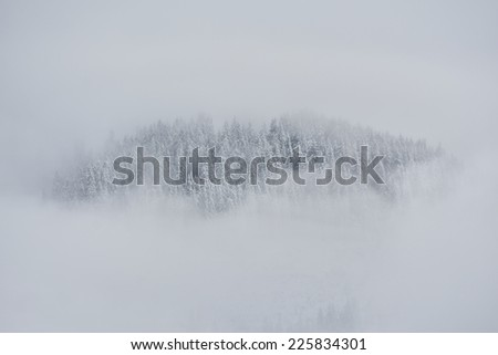 Beautiful winter landscape with snow covered trees in the fog - stock photo