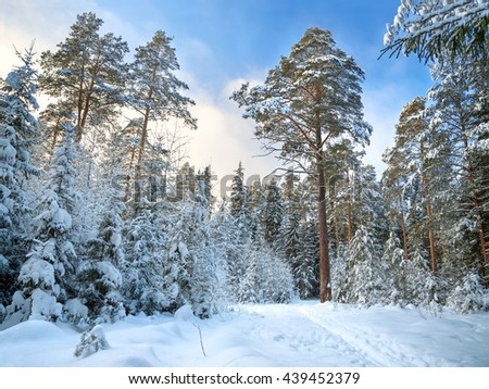 Beautiful winter landscape with the forest and  blue sky.  rural  with snow and trees . Frosty wintry day - stock photo