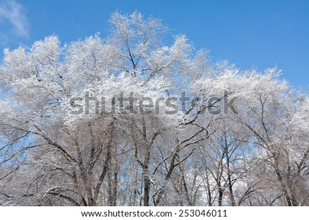 Beautiful winter landscape with white trees covered with frost  - stock photo